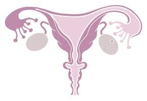 reproductiveorgan